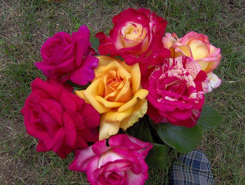 Fleur les rosiers - Taille rosier buisson ...